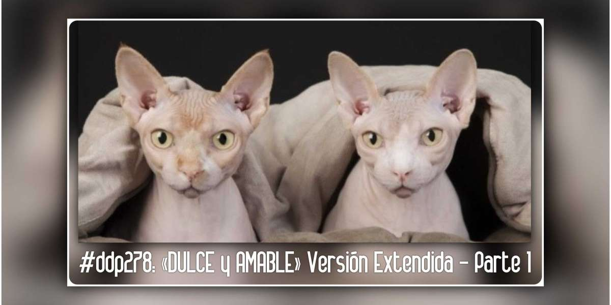 #ddp278: «DULCE y AMABLE»