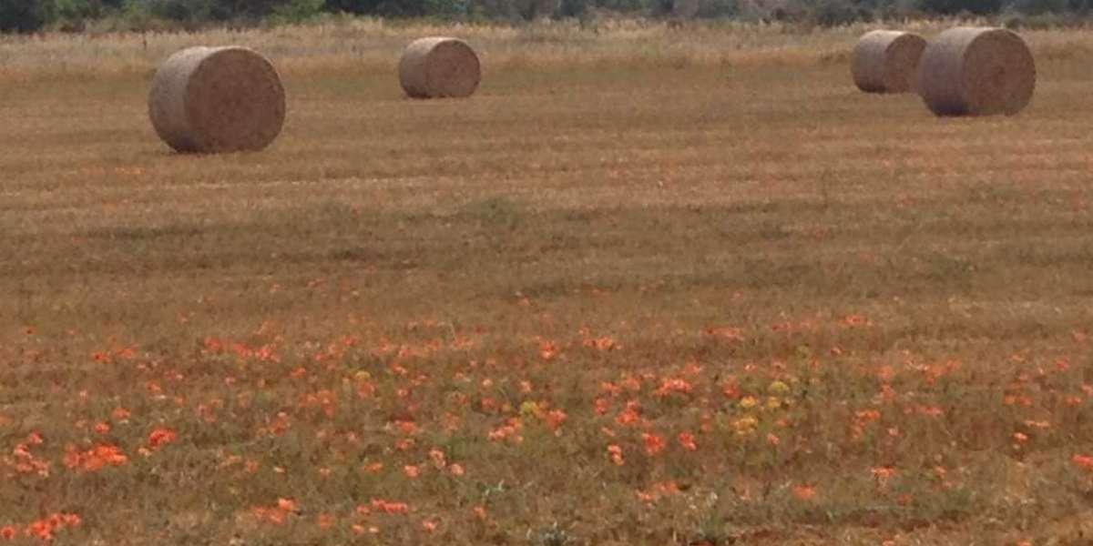 El campo y su arado